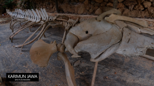Kerangka Tulang Ikan